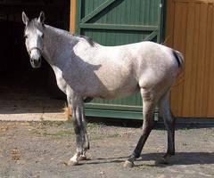 Año del caballo