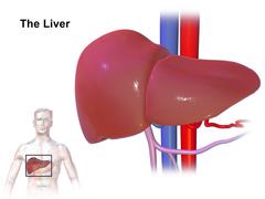 Enfermedades hígado