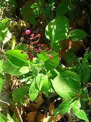 plantas-deporte