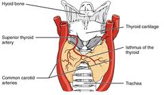 Glándula tiroide